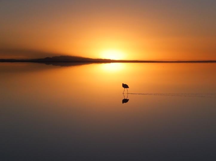 2017-18 1_flamingo at sunrise on the Uyuni salt flat