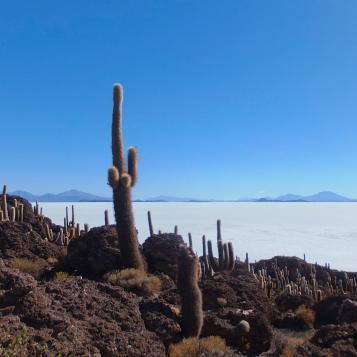 4_cactus island